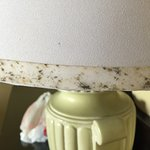 Mold on the lamp. Had a picture of a ring of mold around the shower, but the picture won't load.
