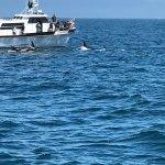Photo de Monterey Bay Whale Watch