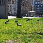 Birds on grass