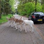 Photo of Center Parcs Het Meerdal