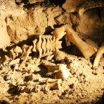 Photo of Spellbound Glowworm & Cave Tours