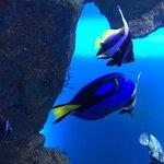 Photo de Grand Aquarium