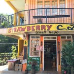 Photo of Strawberry Cafe