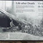 A fallen redwood