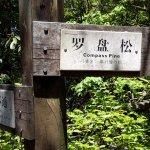 Tianmu Mountain - Compass Pine Crossing