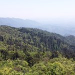 Tianmu Mountain - Compass Pine View