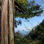 Tianmu Mountain - View
