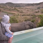 Elephant came right up to the pool to grab a quick drink :)