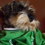 Suzie Dolan supporting Ireland