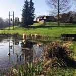 Visit our wildlife pool, a stones throw from our B&B accommodation