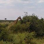 Foto de Royal Kruger Lodge