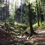Photo of Chambres d'Hotes La Forestiere