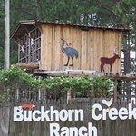 Buckhorn Creek Ranch