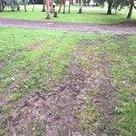 Zdjęcie Otways Tourist Park
