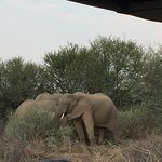 Sanbona Wildlife Reserve - Tilney Manor, Dwyka Tented Lodge, Gondwana Lodge Imagem