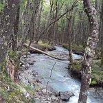 Bosque en el sendero al Glaciar Huemul