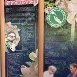 Sloth Sanctuary of Costa Rica Foto