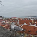 Guided Tour Tallinn