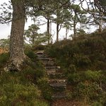 A walk in the Caledonian Forest