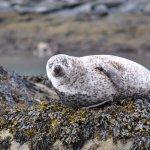 Hello Seals!