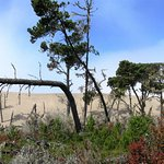 Explore Ma-le'l Dunes west of town.  A dynamic, one-of-a kind ecosystem found nowhere else.
