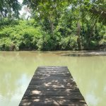 The jetty above the Belize River, which runs past the back of the Jungle Dome's gardens