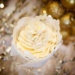 Gourmet Cupcake - Vanilla