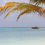 Maldive Due Palme Photo