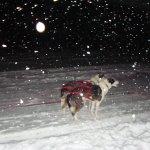 Photo de Davvi Arctic Lodge