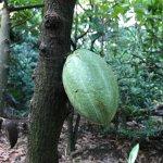 Photo of La Maison du Cacao