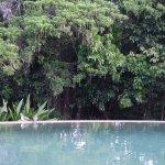 Wet edge Rainforest pool looking towards the Rainforest