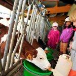 Mini ferme - Village Club Cap'vacances de Chapelle-des-Bois