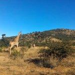 Photo of Cashan Africa Tours & Safaris