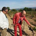 Francois explains all about grapes