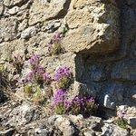 Foto di Helmsley Castle