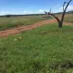 Mbalageti Safari Camp Ltd