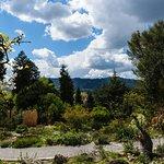 Zurich Botanic Gardens