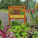 Hana Farms from the road