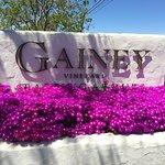 Photo of Gainey Vineyard