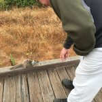 the squirrel along the boardwalk wasn't afraid of humans, super friendly
