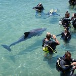 Photo de Dolphin Reef