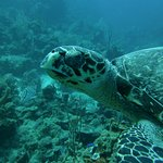 Adam took this picture for me, but one of several turtles we saw during our dives