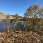 From our beautiful walk from Greystones to Newtonmore