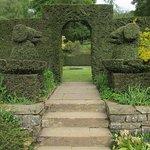 Dog topiary at Knightshayes