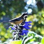 The Honey Eater bird at Gracehill
