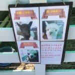 Photo of Nasu Alpaca Farm