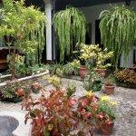 Relaxing garden in the courtyard