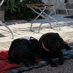Hundeurlaub im CLOS DE LA GARDE