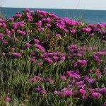 Photo de Saintes-Maries-de-la-Mer beach