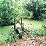 The beautiful swamp
